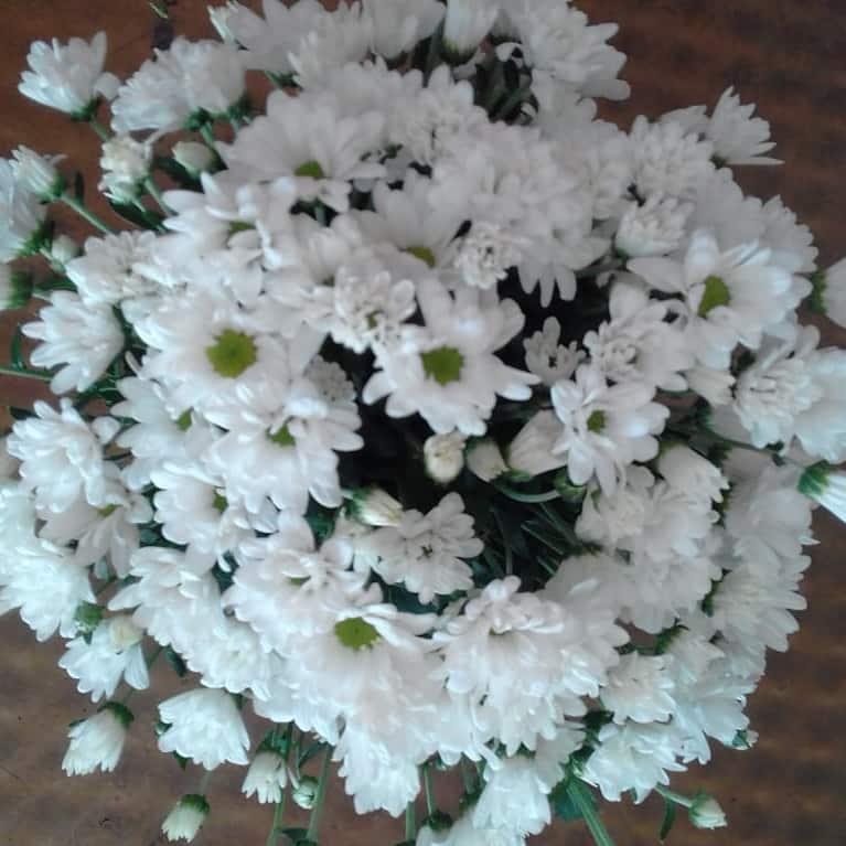 Floricultura em Guarapari - Imagem 8