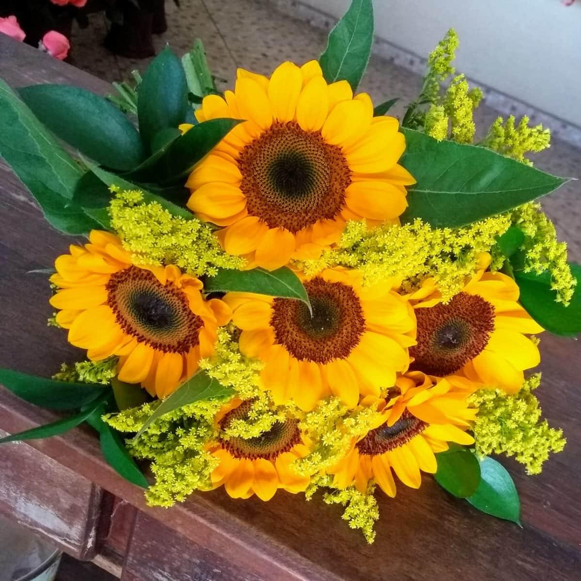 Floricultura em Guarapari - Imagem 3